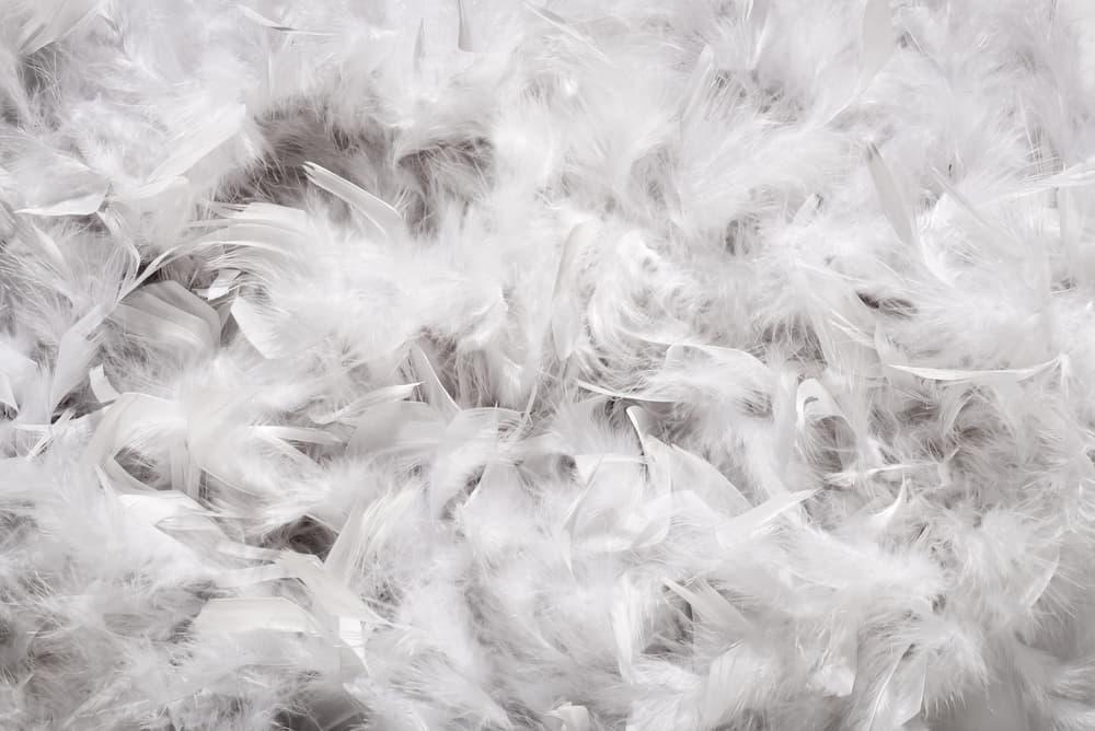 布団の中の羽毛