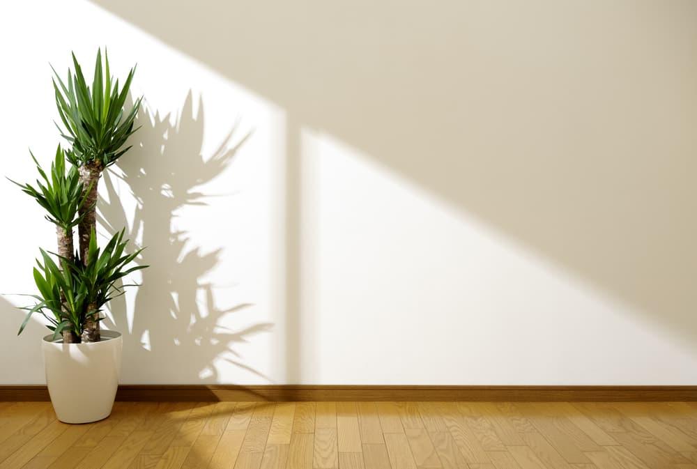 観葉植物とフローリング、壁