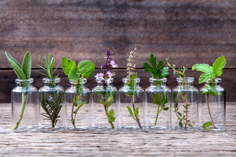 様々な植物と小瓶