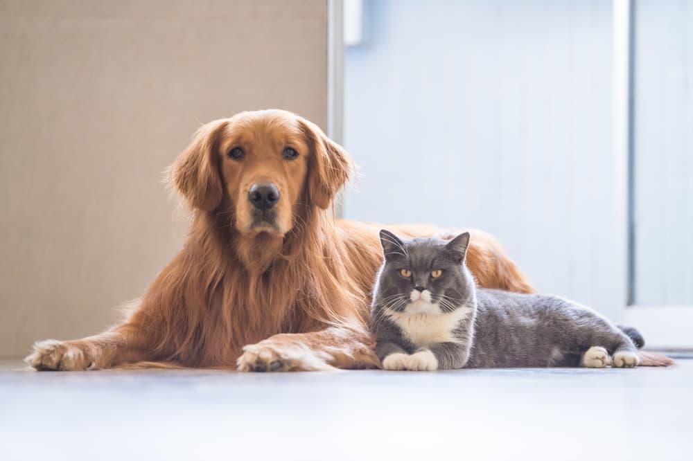 犬と猫がこちらを見ている